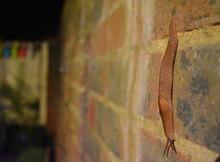 Land Slug Is Small Animal With...