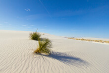 Desert Sand Dune Background. Soap Tree Yucca Plant In The Sand Dunes Of White Sands National Park In New Mexico.