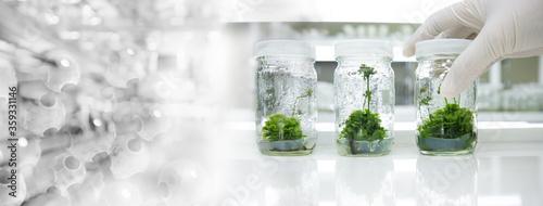 glove wearing hand of scientist three bottle of plant tissue culture in biotechn Fototapet