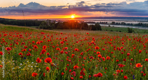 Fototapeta sunrise over the valley of blooming wild poppies, in the background the rising sun and beautiful morning fog	 obraz na płótnie