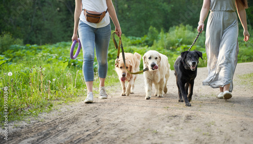 Fototapeta Two unrecognizable women on walk with three dogs in park obraz