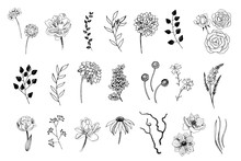 Set Of Hand Drawn Flowers, Lea...