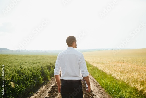 Wheat farmer and agronomist inspecting cereal crops quality in cultivated agricultural plantation field Canvas Print