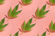 Pattern with green cannabis leaves on pink background