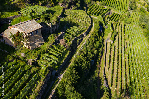 Valtellina (IT) - Aerial view of farm with vineyards in the Tresenda area