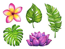 Collection Of Watercolor Illus...