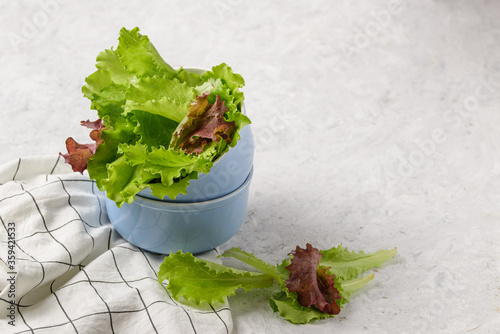 fresh lettuce leaves in a blue bowl on a light background Canvas Print