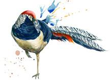 Pheasant Birds And Paint Splas...