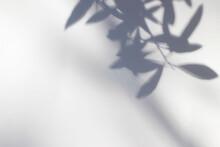 Shadows Of Olive Tree Leaves, ...