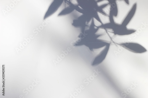 Obraz Shadows of olive tree leaves, branches over white wall. Summer background with a pattern of lens flare. Sunlight overlay, soft blurred photograpy, no people, empty copy space. Mediterranean concept. - fototapety do salonu