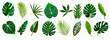 Leinwandbild Motiv set of green monstera palm and tropical plant leaf isolated on white background for design elements, Flat lay