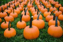 Small Pumpkins For Sale At A Pumpkin Patch