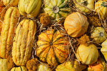 Different Types Of Ornamental Squash