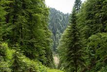 Subtropical Rain Green Forest ...