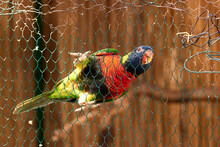 Beautiful Colorful Parrot On T...
