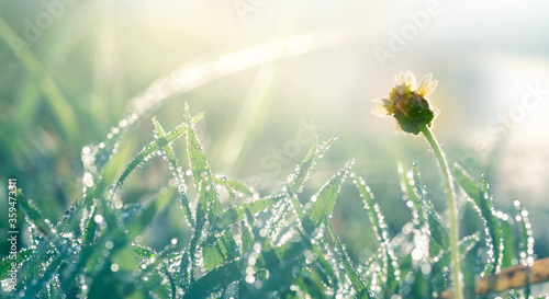 Water droplets atop the grass in the morning with bokeh Wallpaper Mural