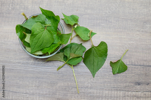 Houttuynia cordata leaves on bowl, eating Canvas Print