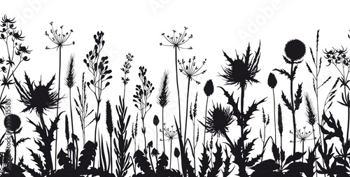 Obraz Seamless horizontal banner with wild flowers and thistle silhouettes. - fototapety do salonu