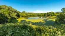 Summer Landscape Panorama Of R...