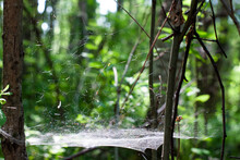 Web Between Leaves, Branches I...