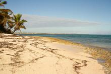 White Sand Beach With Seaweed ...