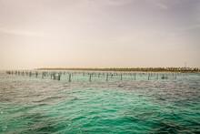 Snorkling Shark Cages
