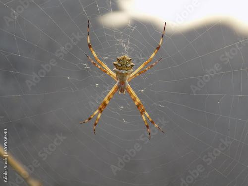Photo Aranha. Spider.