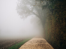 Road In The Autumn Fog