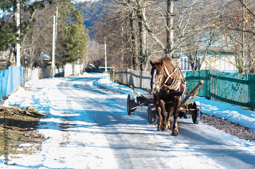 Fototapety, obrazy: A horse pulls a wooden cart. A horse running in the village.