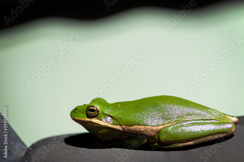 Photo Green Frog On a Rock