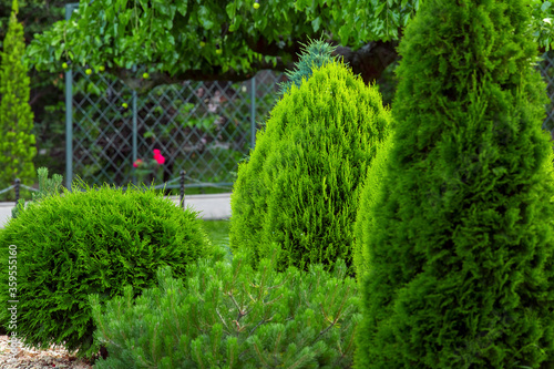 Landscaping of a backyard garden with evergreen conifers and thuja in a summer park with decorative landscape design close up details, nobody Fototapet