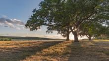 Oak Tree In Field By Lake Geor...