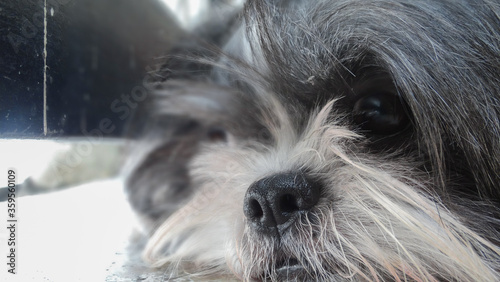 Zoom enfoque a un adorable cachorro Canvas Print