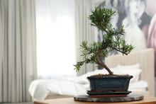 Japanese Bonsai Plant On Table...
