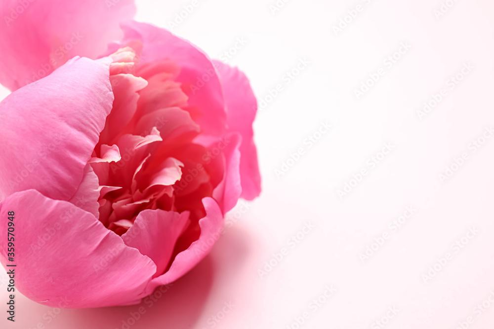 Fototapeta Beautiful pink peony on light background, closeup. Space for text