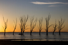 Dead Trees Sunset  Silhouette ...