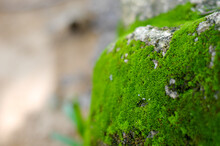 Beautiful Bright Green Moss Gr...