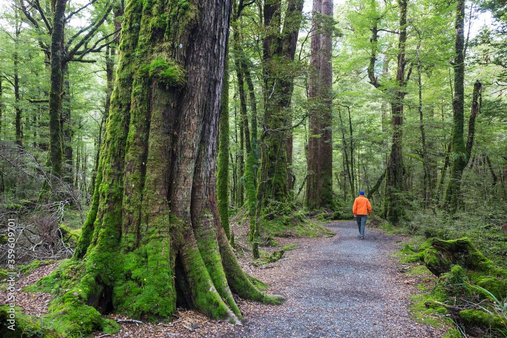 Fototapeta Hike in the forest