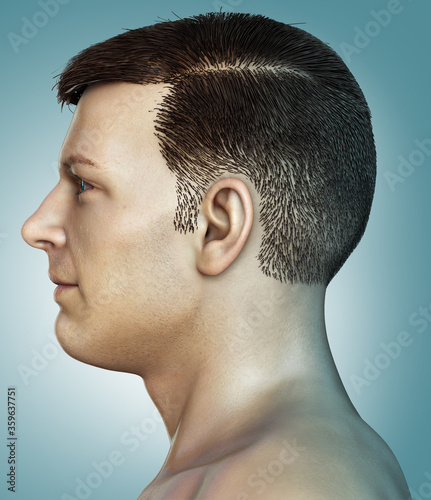 3d rendered medically accurate illustration of a male head anatomy Wallpaper Mural