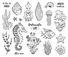 Sea Icon Set. Coral, Starfish, Tropic Fish, Horse, Seaweed, Shell, Jellyfish. Sketch Graphic Elements. Trendy Underwater Black Line Engrave Art. Cool Hand Drawn Vector Illustration Isolated On White