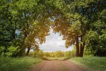 Summer Landscape. Dirt Road An...