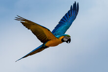 Flying Beautifully Coloured Pa...