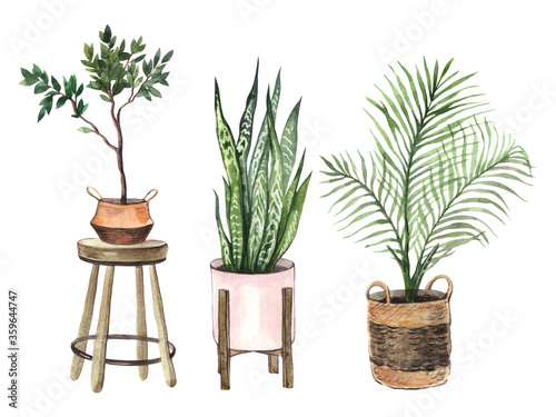 Fotografie, Tablou Watercolor set with indoor plants in pots on a white background
