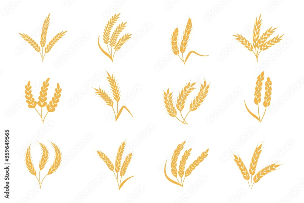 Fototapeta Wheat and rye ears. Harvest stalk grain spike icon. Elements for organic food logo, bread packaging or beer label. Isolated vector silhouette set