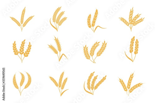 Obraz Wheat and rye ears. Harvest stalk grain spike icon. Elements for organic food logo, bread packaging or beer label. Isolated vector silhouette set - fototapety do salonu