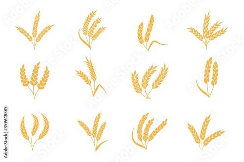 Wheat and rye ears Fototapeta