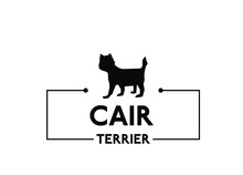 Cair Terrier - Vector Dog