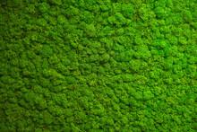 Close Up Green Moss Texture, Background. Green Texture