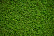 Moss Wall, Green Wall Decorati...