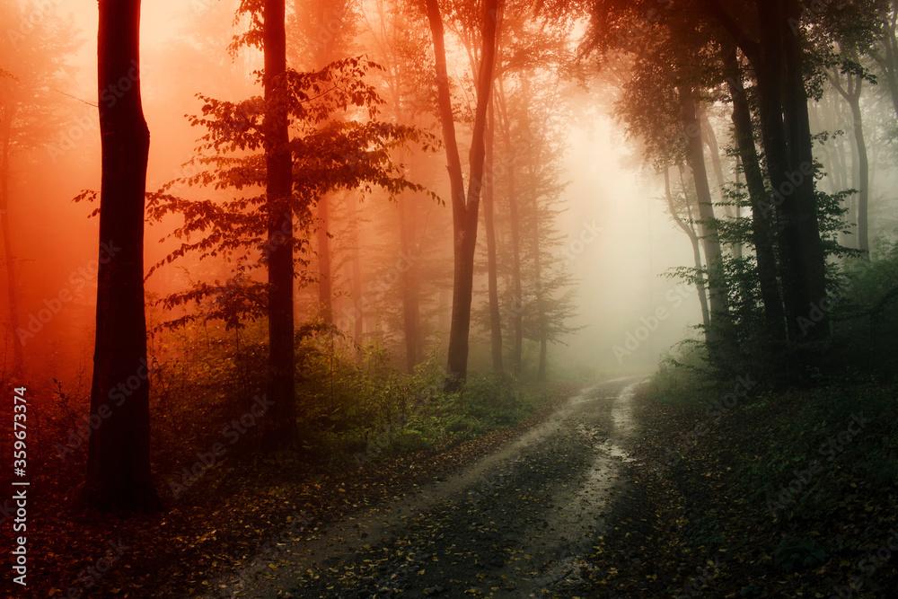 Fototapeta road through dary mysterious woods in sunset light